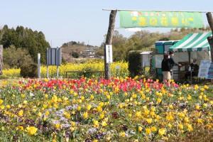IMG_0668菜の花祭り (29)