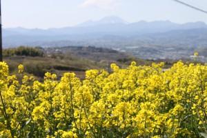 IMG_0668菜の花祭り (26)