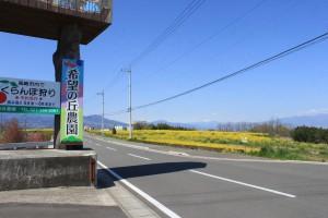IMG_0668菜の花祭り (3)◎